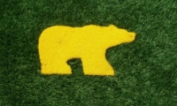 web_golden-bear-turf