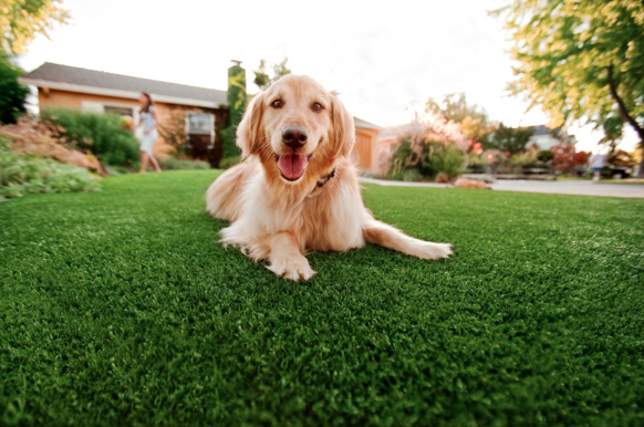 is artificial grass safe for dogs?