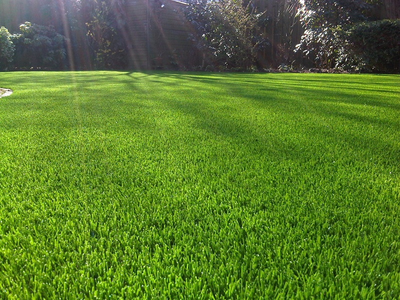Why should I get artificial grass in Tampa?