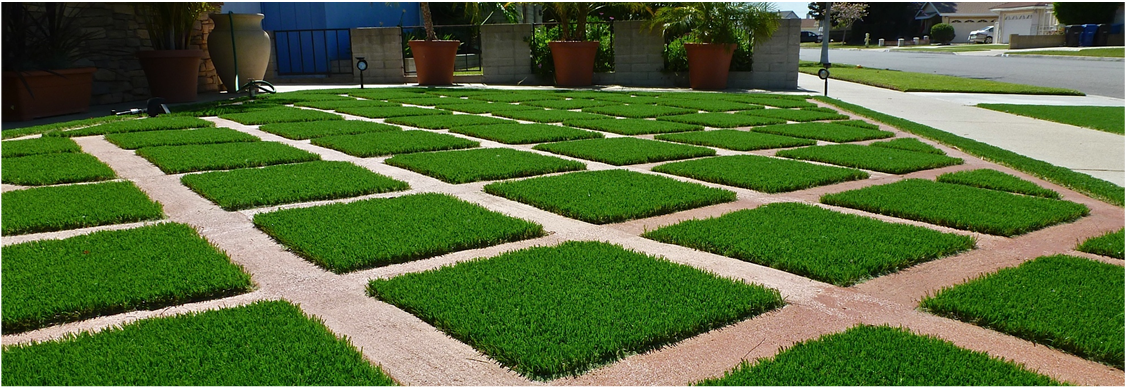Artificial grass in Miami facts to know