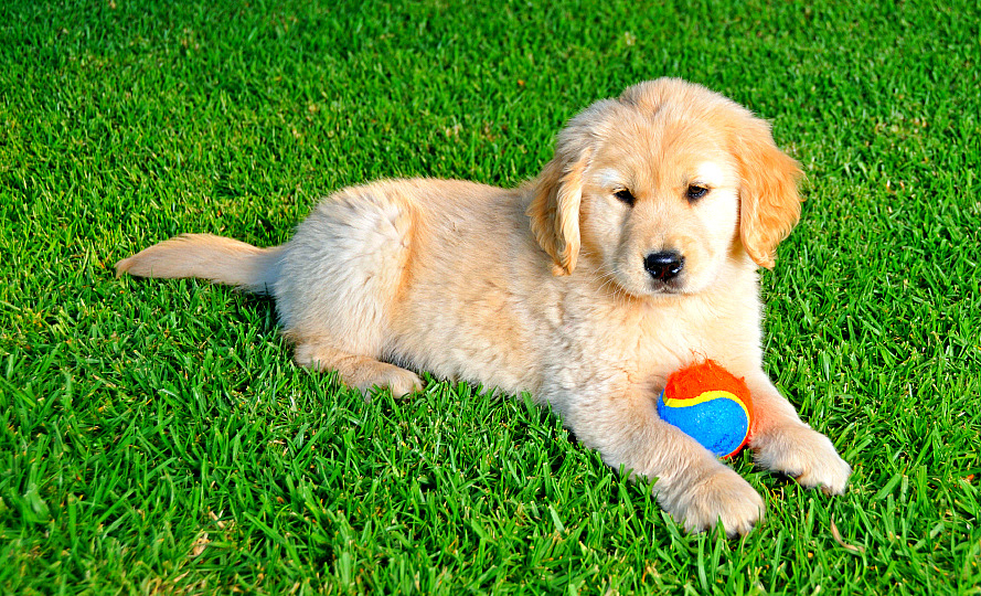 is artificial grass for dogs a good idea