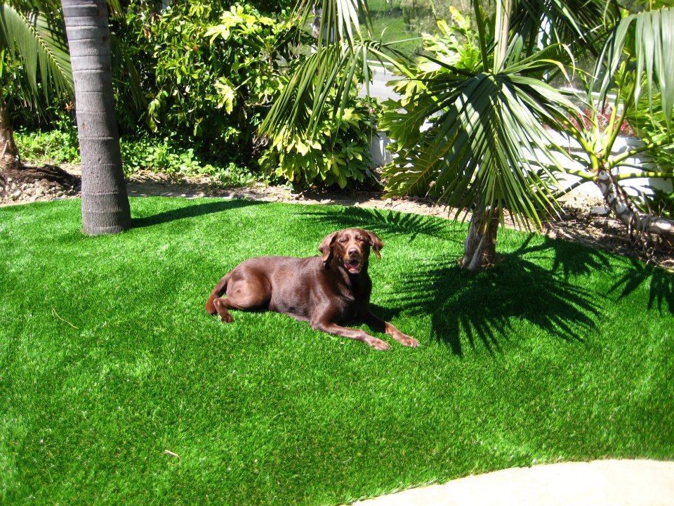 should i use fake grass in florida?